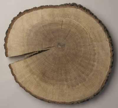 imteaz_bengalansis_1290576477_5-oak_tree