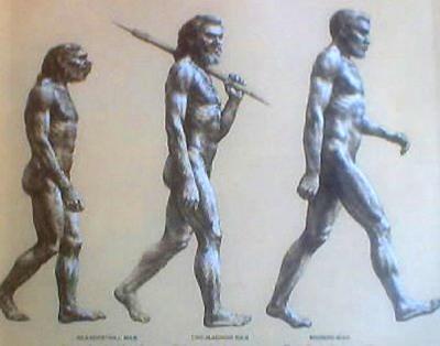 evolution-std.jpg-tm